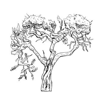 Girafe acacia isolé sur fond blanc. arbre africain de silhouette rétro. savane vintage en gravure.