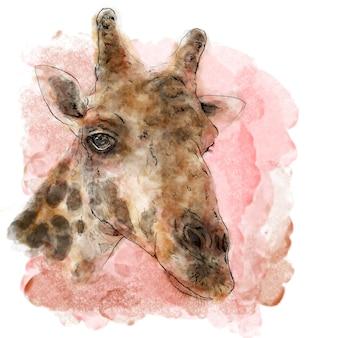 Girafe sur aquarelle peinture art vectoriel.