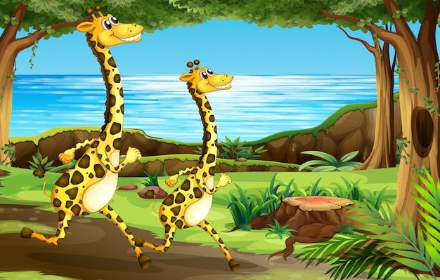 Girafe courant dans la forêt