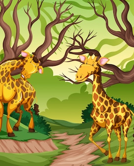 Girafe dans la jungle