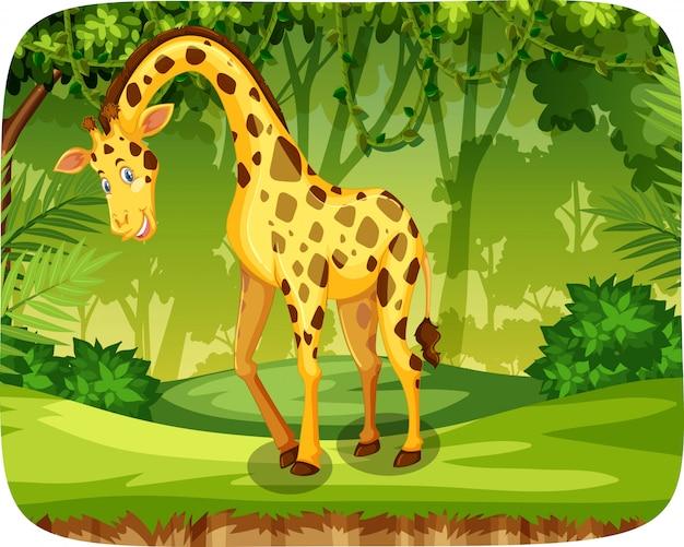 Une girafe dans la jungle