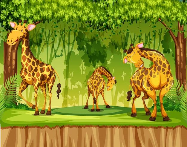 Girafe dans scène nature