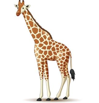 Girafe de dessin animé isolé sur fond blanc