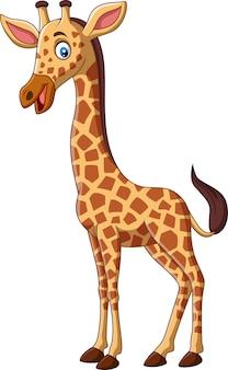 Girafe de dessin animé isolé