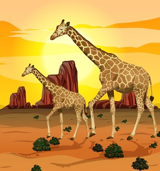 Girafe en fond de nature