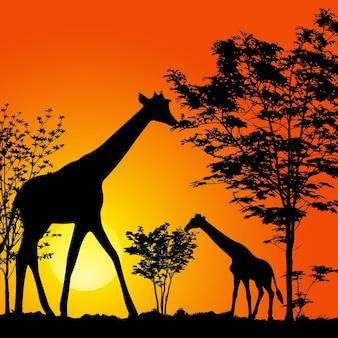 Girafe avec silhouette de bébé sur fond de coucher de soleil