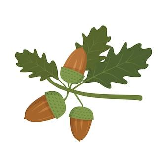 Glands et feuilles de chêne vert sur une branche de fruits d'automne forestiers