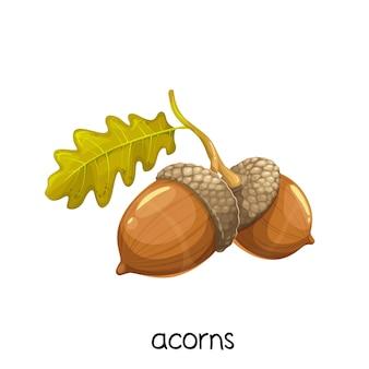 Glands pour décorations design d'automne
