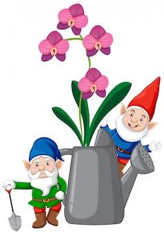Gnomes avec orchidées en arrosoir style cartoon sur fond blanc