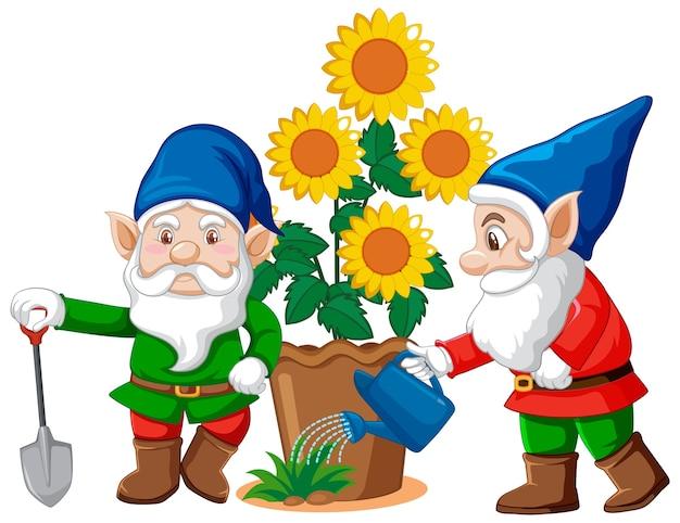 Gnomes avec pot de fleur en style cartoon sur fond blanc