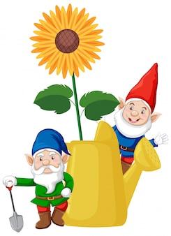 Gnomes avec tournesol dans l'arrosoir style cartoon sur fond blanc