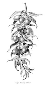 Goji berry main dessin vintage gravure illustration noir et blanc clipart sur blanc