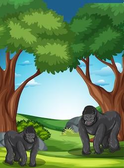 Gorille à l'état sauvage