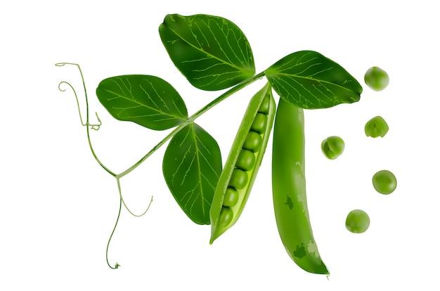 Gousse 3d réaliste coloré de pois verts mûrs isolé sur blanc