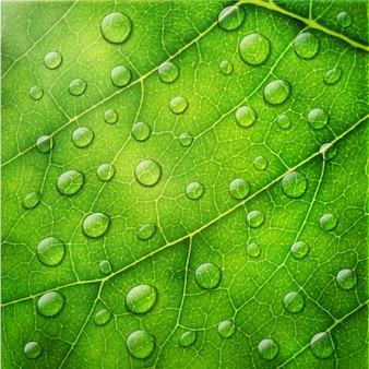 Gouttes d'eau sur fond de feuille verte macro