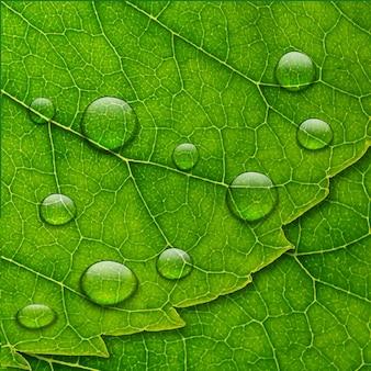 Gouttes d'eau de vecteur sur fond de feuille verte macro