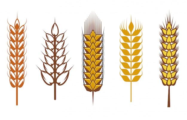 Graines de céréales et symboles isolés sur blanc
