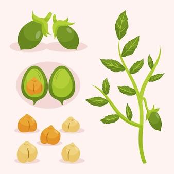 Graines et plantes de pois chiches végétariens