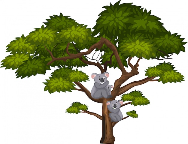 Grand arbre et koala mignon