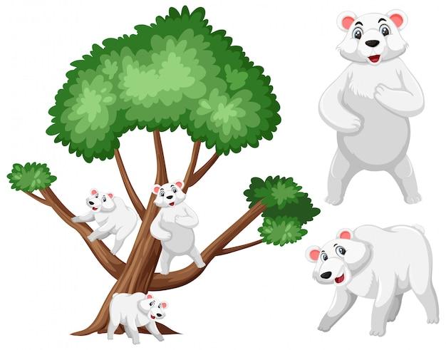 Grand arbre et ours polaires sur blanc