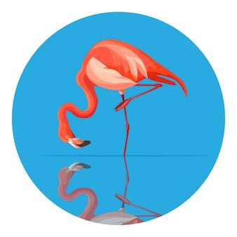 Grand échassier flamant rose au plumage rose ou écarlate, aux longues pattes et au cou. animal penché pour boire de l'eau, en cercle