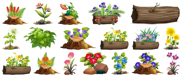 Grand ensemble de fleurs colorées sur rochers et bois