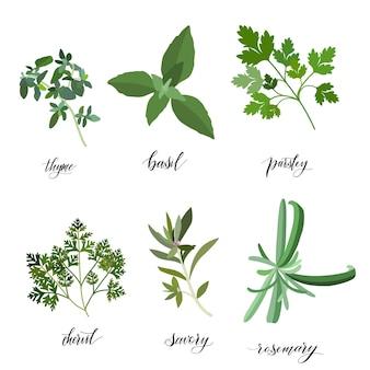 Grand ensemble d'herbes et d'épices culinaires populaires. objets isolés. plate illustration vectorielle. pour les soins de santé, le magasin, les cosmétiques, les soins de santé, l'étiquette d'étiquette, la conception de produits alimentaires