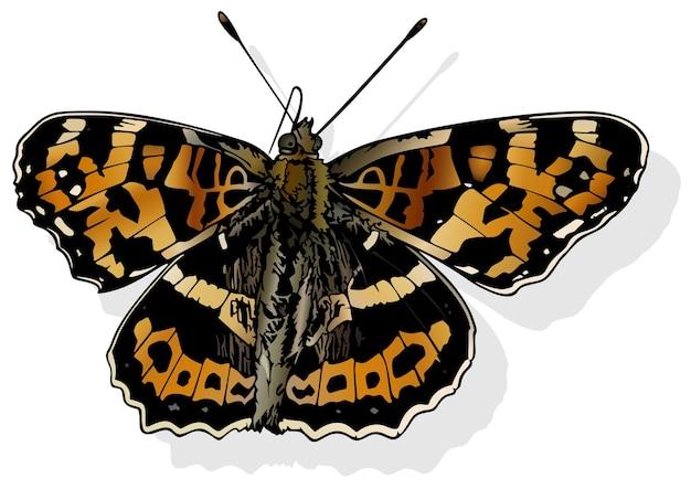 Grande carte - beau papillon araschnia burejana isolé sur fond blanc, illustration vectorielle