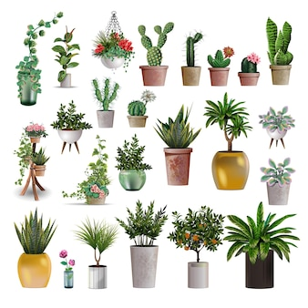 Grande collection de plantes.