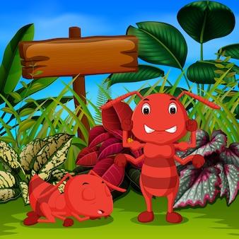 Grande fourmi dormir dans le jardin et son ami en colère
