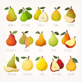 Grande variété de poires avec des noms images vectorielles isolées