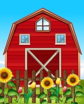 Grange rouge et champ de tournesols