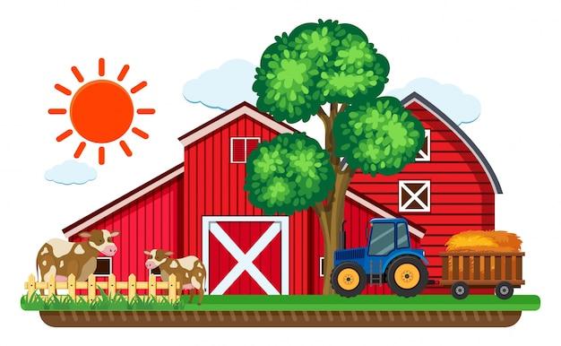Granges rouges et deux vaches dans la ferme