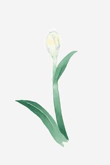 Graphique d'élément de dessin botanique de plante de fleur
