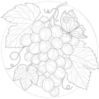 Grappe de raisin avec feuille. papillon.livre de coloriage antistress pour enfants et adultes. illustration isolée sur fond blanc. style zen-tangle.
