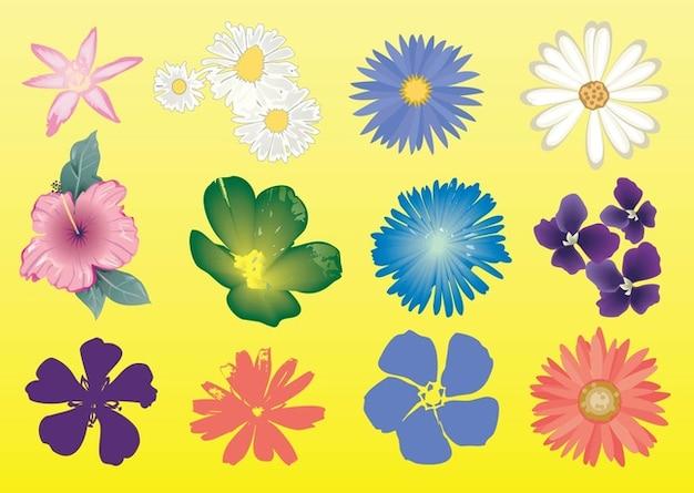 Gratuitement graphiques vectoriels fleurs