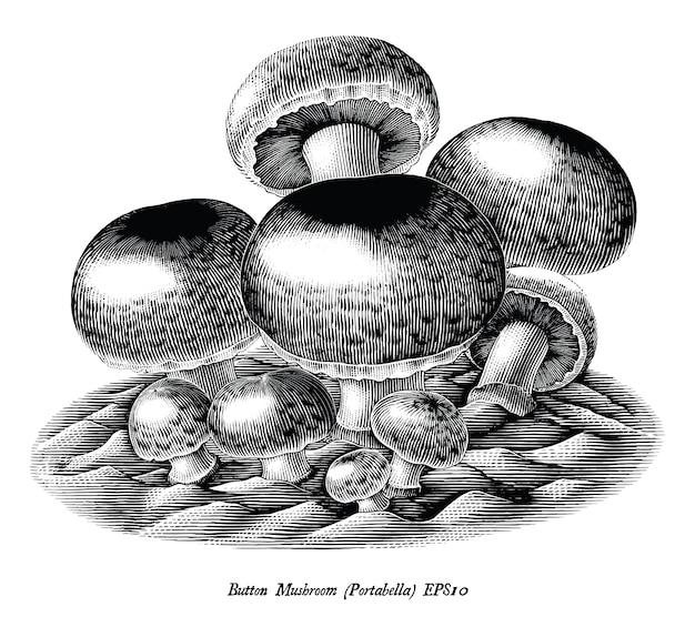 Gravure antique illustration de bouton champignon main dessiner clipart noir et blanc isolé