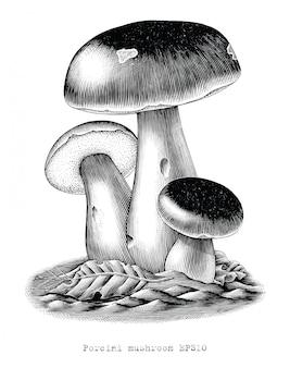 Gravure antique illustration de champignon porcini part dessiner clip art isolé