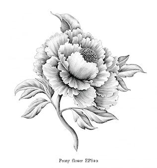 Gravure antique illustration de pivoine fleur dessin style vintage noir et blanc clip art isolé