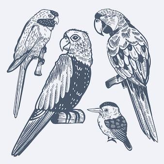 Gravure collection d'oiseaux tropicaux dessinés à la main