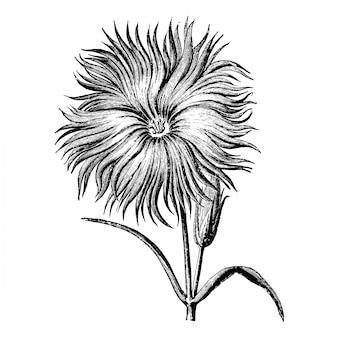Gravure coupée fleuri chinois rose vintage illustrations