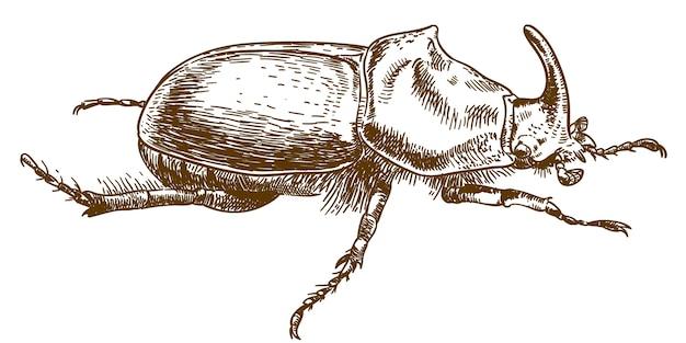 Gravure dessin illustration de scarabée rhinocéros