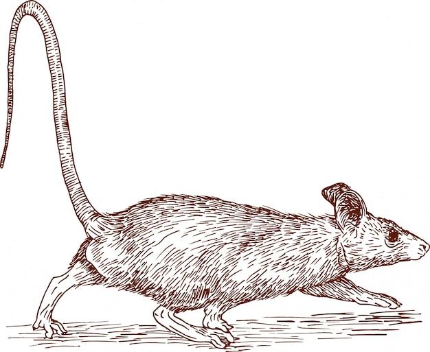 Gravure dessin illustration de souris nouvel an chinois