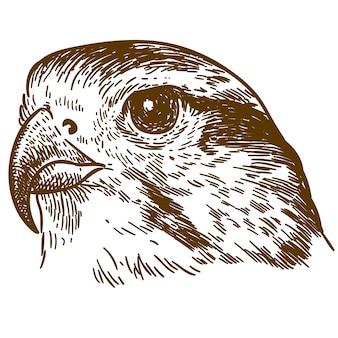 Gravure dessin illustration de tête de faucon