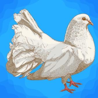 Gravure illustration antique de colombe blanche