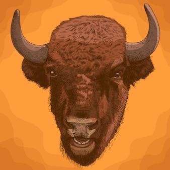 Gravure illustration antique de tête de bison