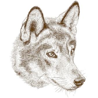 Gravure illustration antique de la tête de loup