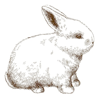 Gravure illustration de lapin moelleux