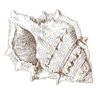 Gravure illustration de spirale coquillage