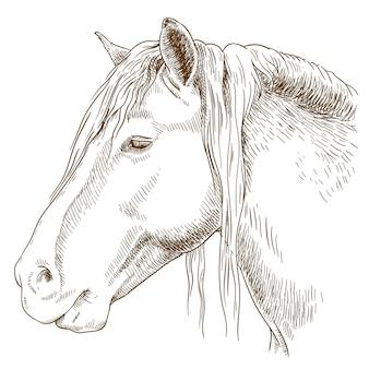 Gravure illustration de tête de cheval